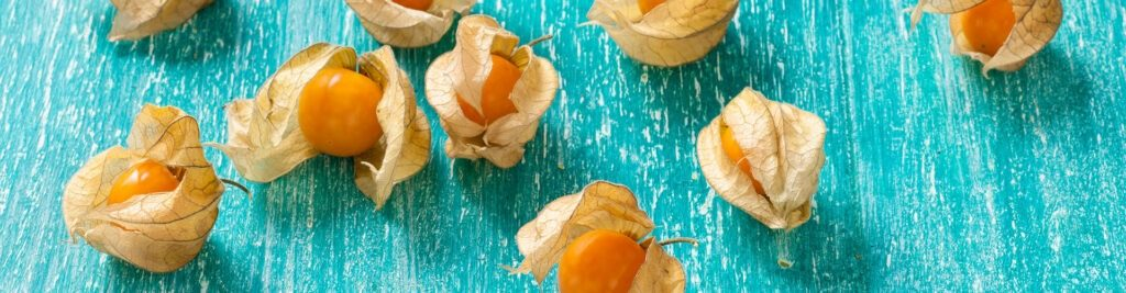 Discovered Physalis